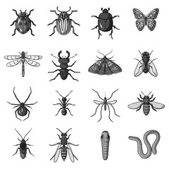 Insects set icons in monochrome style. Big collection of insects vector symbol stock illustration