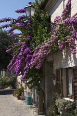 Torre di Palme, Fermo, Marche, Italia