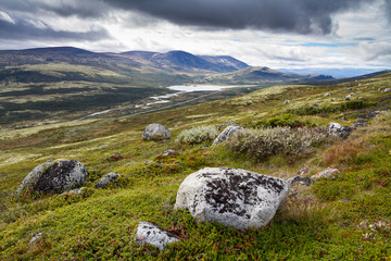 tundra lanscape in dovrefjell national park in norway