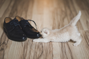 Baby cat games with shoes 7440.