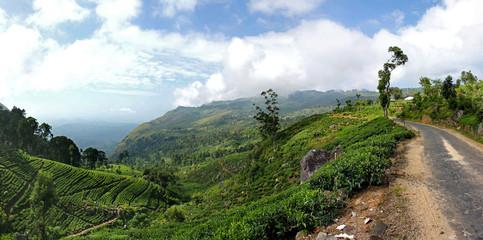 Panorama einer grünen Berglandschaft mit Teeplantagen, Bäumen und Bergstraße im Hochland von Sri Lanka