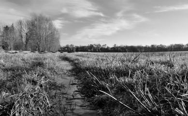 paysage noir et blanc nature froid