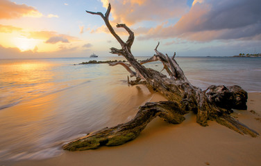 Fototapeta Driftwood beach obraz