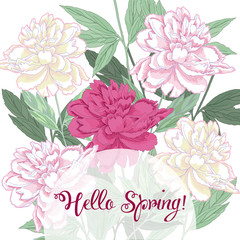 Spring  background with white and pink peony