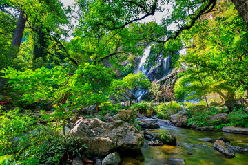 beautiful tropical rain forest and waterfall in deep forest