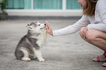 Puppy pressing his paw against a Girl hand