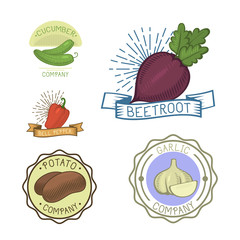 Vector vegetables label template icon.