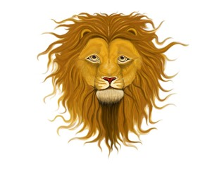 Lion with long wavy curls on the mane