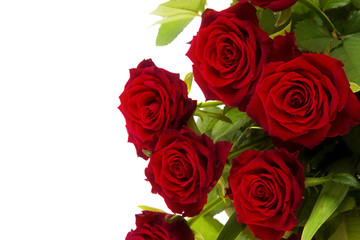 Red roses on a white background