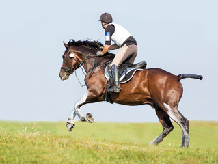 Equestrian sport: rider on a bay horse. Eventing.