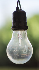 Old bulbs
