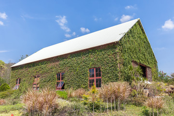 Natural wooden barn with green plant exterior wall in agricultur