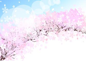 桜  背景