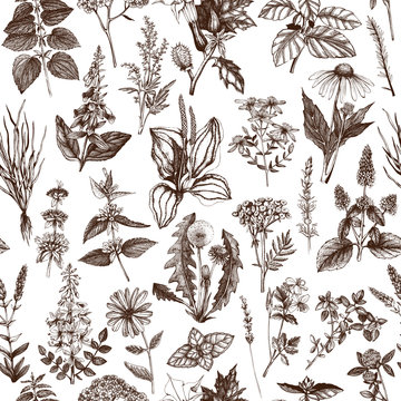 Vector background with hand drawn weeds and herbs. seamless pattern with vintage medicinal plants sketch.