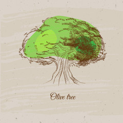 Olive tree in vintage style. Vector illustration with old olive tree.