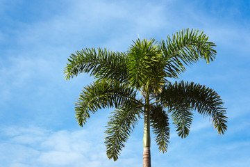 Lone palm on a background of blue sky