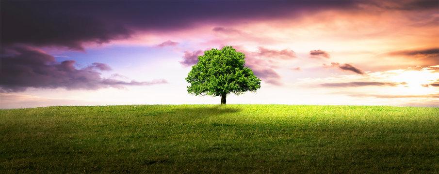 einsame Baum.