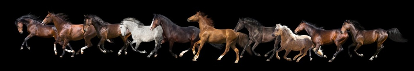 set of ten horses isolated on black background. Banner for web