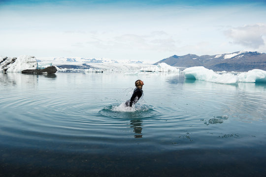 Man in wetsuit, plunging into cold water, Iceland, Europe