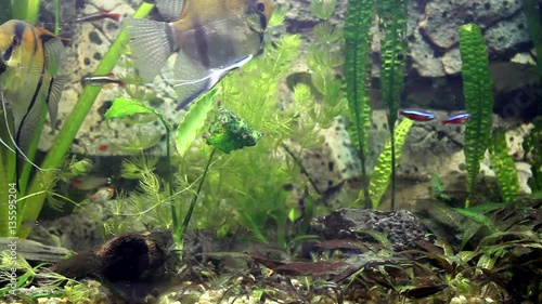 Video Of Fish Life In Aquarium Fish Swim And Eat Stock Footage And