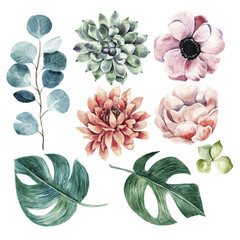 Big flower collection.Watercolor hand drawn illustration with plants