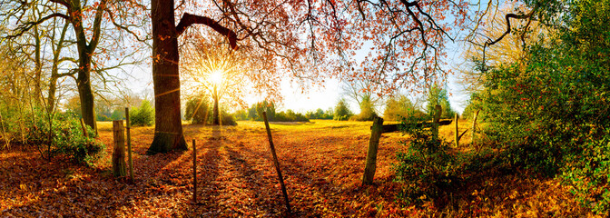 Landschaft im Herbst mit Wald, Wiese und Sonne