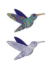 bird colibri