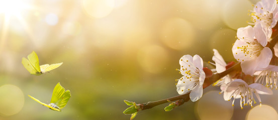 Fototapete - Spring flower background; Easter landscape