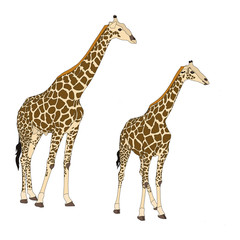 Two giraffes standing