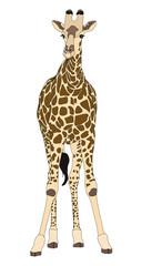 Giraffe standing front sight