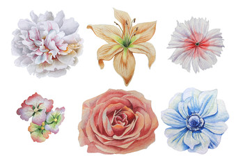 Set with flowers. Rose. Alstroemeria. Peony. Lily. Anemone. Rose. Watercolor illustration.