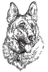 German shepherd vector hand drawing Illustration
