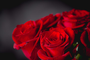 Beautiful valentines roses on dark background