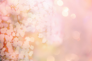 Abstract background with a branch of baby's breath.