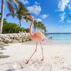 In de dag Flamingo Three flamingos on the beach
