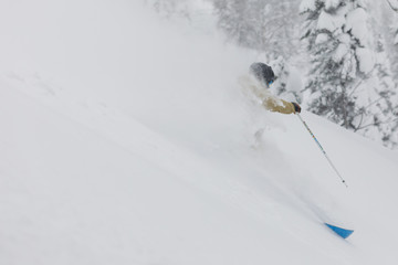 Freeride skier in the forest