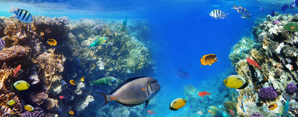 Photo Blinds Coral reefs Colorful coral reef fishes of the Red Sea.
