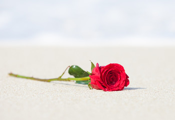 Single red rose in the sand.
