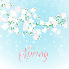 Wall Mural - Spring branch card. Blossoming tree brunch with flowers vector