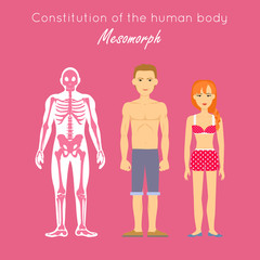 Constitution of Human Body. Mesomorph. Vector