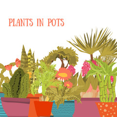 Collection of indoor plants and flowers in pots. Cartoon style. Green cactuses, succulents