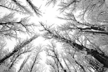 Snowing landscape in the park. Fisheye lens effects