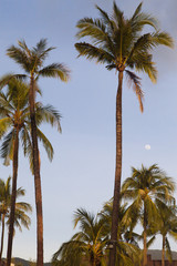 Palm trees against the background of the sky