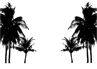Realistic SilhouetteTropical Coconut Palm Tree, black silhouettes and outline contours on white background. Vector