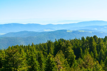 Spring green pine trees and Rila mountains landscape in Bulgaria