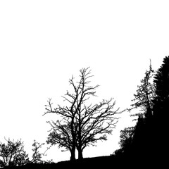Realistic tree silhouette (Vector illustration).