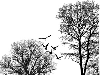 seagull flying between black bare trees crowns