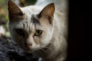 Cute serious cat is sitting at home
