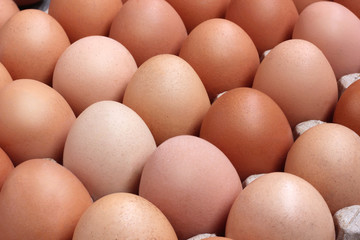 fresh chicken brown eggs in packing.