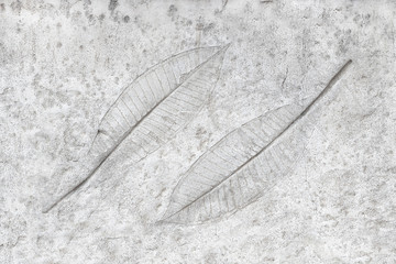 marks of leaves on the concrete